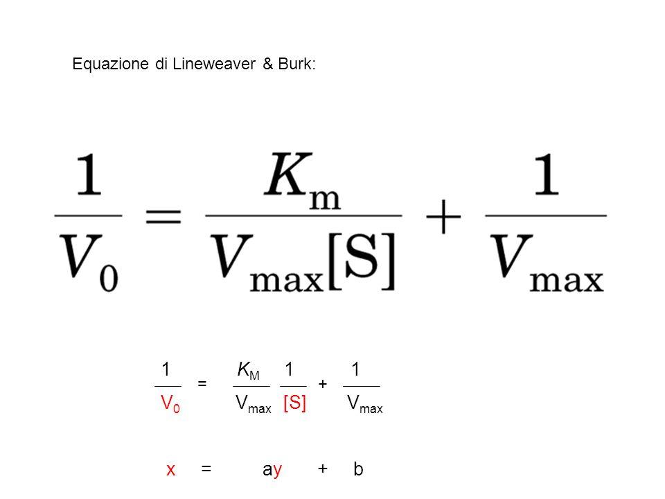 1 KM 1 1 V0 Vmax [S] Vmax x = ay + b Equazione di Lineweaver & Burk: =